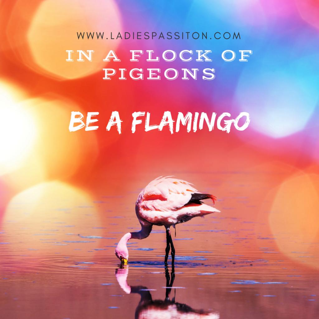 Flock of pigeons be a flamingo/ quotes / www.ladiespassiton.com